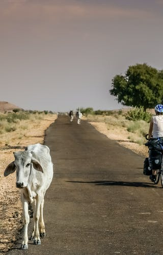 Easy Cycling In Rajasthan