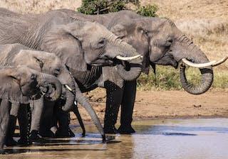 El  Karama  Elephants