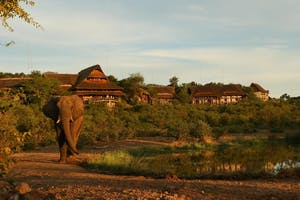 Elephant Visiting Victoria Falls Safari Suites