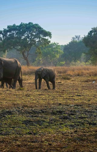 Elephant And Lion In The South Luangwa