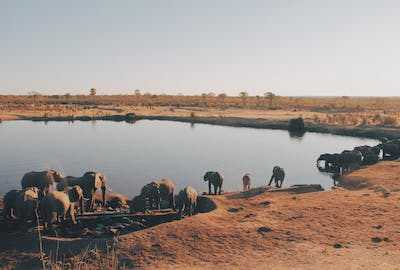 Elephant Drinking In Hwange National Park