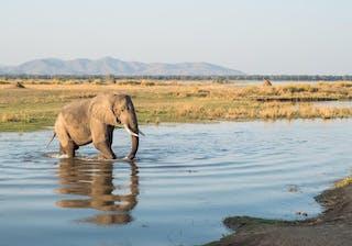 Elephant In Mana Pools
