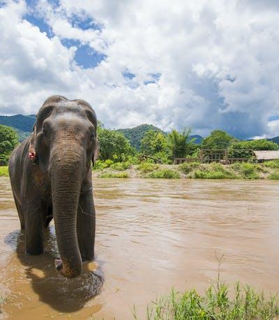 Elephant In Periyar National Park