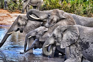 Elephant Sightings On Leo Houldings Family Adventure In Botswana