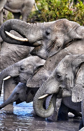 Elephant Sightings On  Leo  Houldings Family Adventure In  Botswana