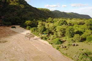 Elephant Visitors To Manyara Green Camp