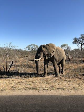 Elephants And  Big 5