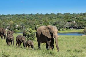 Elephants At Chitwa Chitwa
