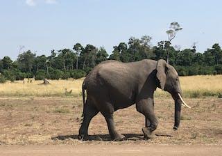 Elephants At Il Moran