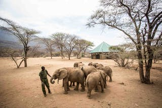 Elephants At Reteti With Keeper By Stuart Butler