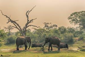 Elephants At  Yala