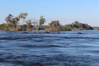 Elephants Crossing The Zambezi Thorntree River Lodge