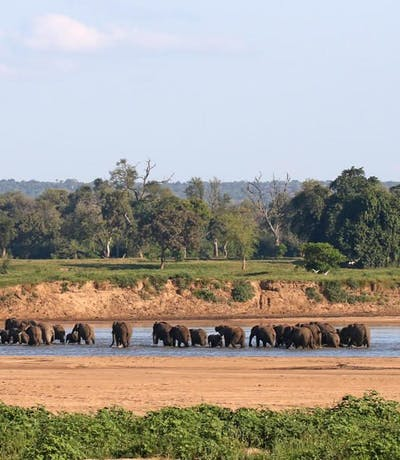 Elephants Crossing The River By Chilo Gorge Tented Camp
