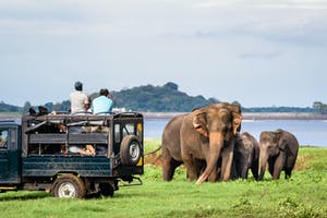 Elephants In  Minneriya  National  Park