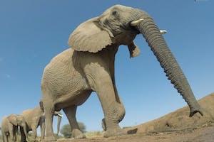 Elephants In Samburu National Reserve