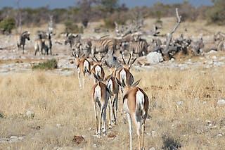 Etosha Nationla Park