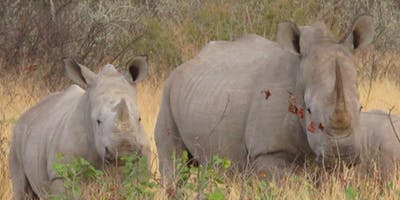 Etosha White Rhino And Calf Margo