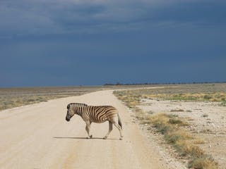 Etosha Zebra Crossing Road And View Of Terrain Margo