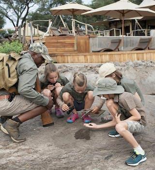 Examining Wildlife Tracks Somalisa Acacia