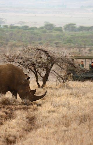 Explorers Safari Kenya