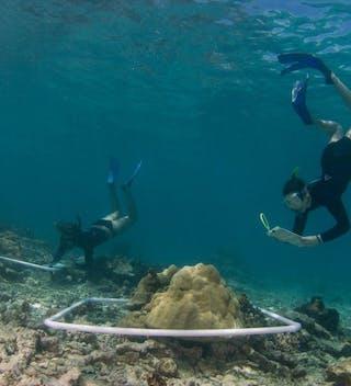Four Seasons Coral Restoration