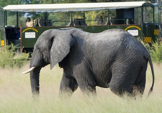 Game Viewing On The Elephant Express
