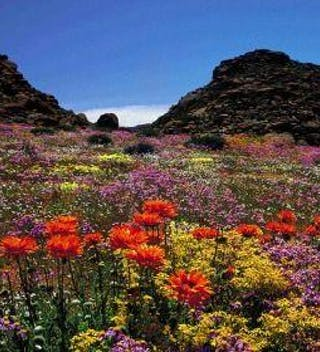 Garden Route In Flower