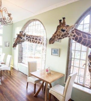 Giraffe Manor Breakfast Time
