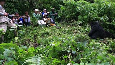 Gorilla Tracking Group Credit Sabyinyo Silverback Lodge
