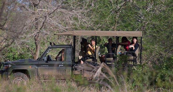 Gorongosa  National  Park Safari