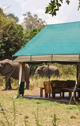 Governors Private Camp Elephants Coming To Visit