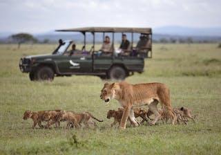 Grumeti River Camp Lion Image