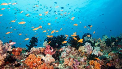 Healthy Coral And Fish