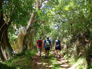 Hiking On St Helena