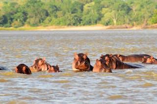 Hippo Rufiji