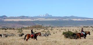 Horseback Zebra