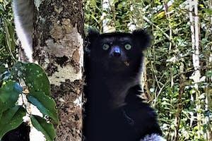 Indri  Toky  Andriamora 3