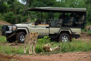 Ila Safari Lodge Game Drive