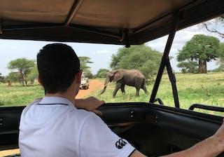Jack With Elephants