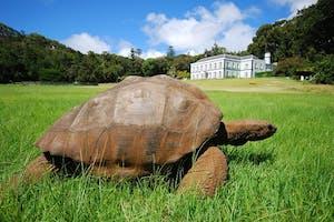Jonathan The Giant Tortoise On St Helena