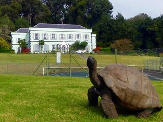 Jonathan The Tortoise In 2016