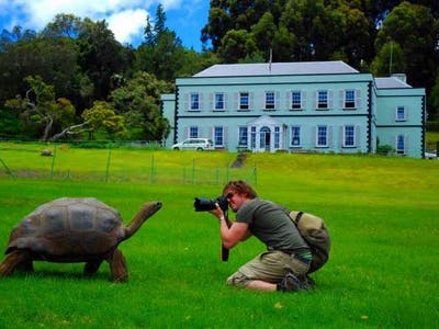 Jonathan The Tortoise Outside Plantation House