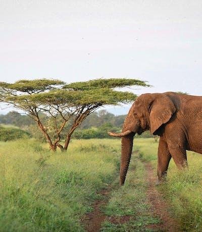 Kzn Elephant