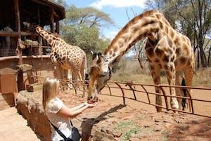 Karen  Residence Giraffe Sanctuary