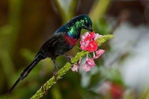 Karibu  Guesthouse Birds