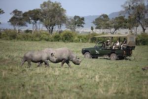 Kichwa  Tembo  Game  Drive