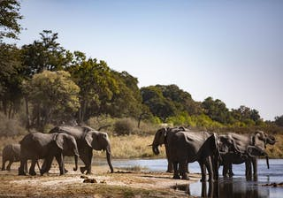 Kings Pool Elephant Sighting