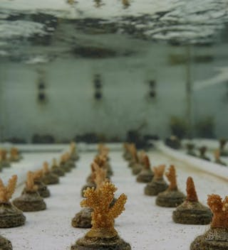 Le Meridien Fishermans Cove Coral Regeneration