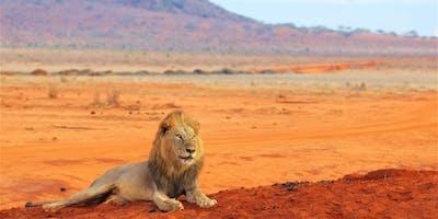 Lion In Tsavo