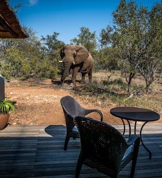 Little  Garonga  Elephant In  Camp